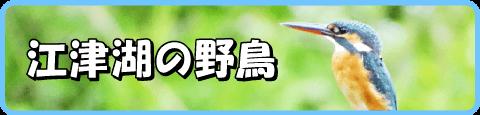 江津湖の野鳥