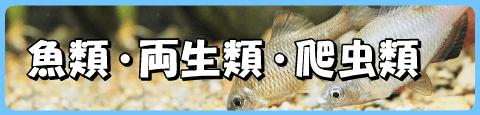 魚類・両生類・は虫類