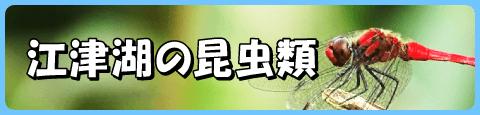 江津湖の昆虫