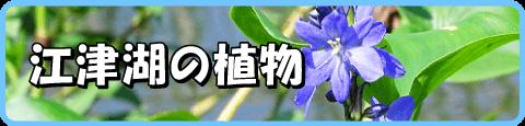 江津湖の植物