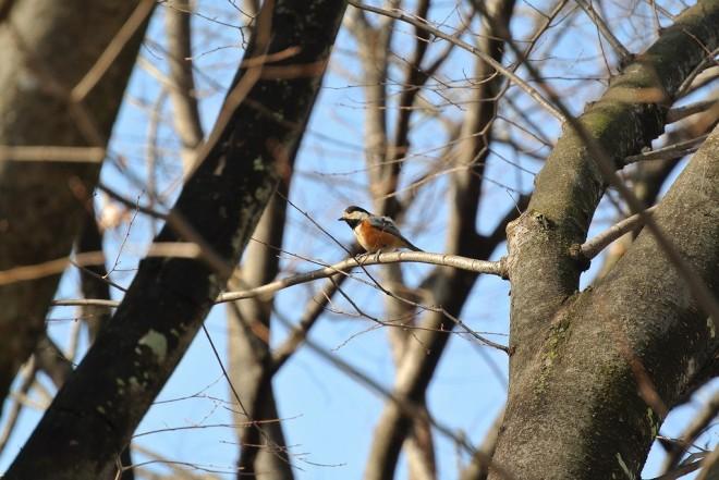 江津湖の小鳥たち