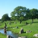 水路に繁茂する水草
