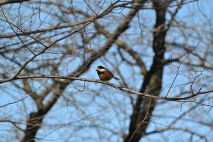 江津湖の小鳥類