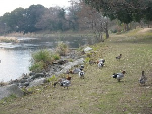 野鳥楽園 (6)