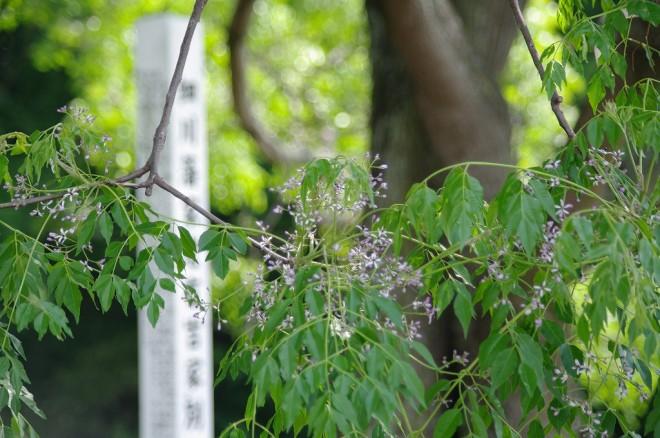 有吉別邸跡 (2)