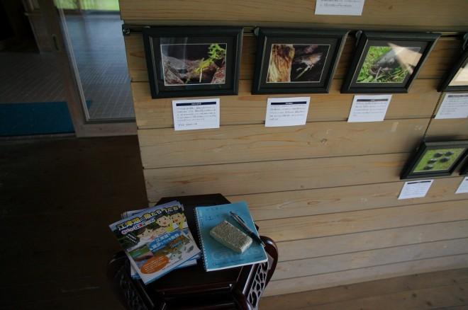 写真展示 「江津湖の魚たち」 by くまもと淡水魚類研究所さま