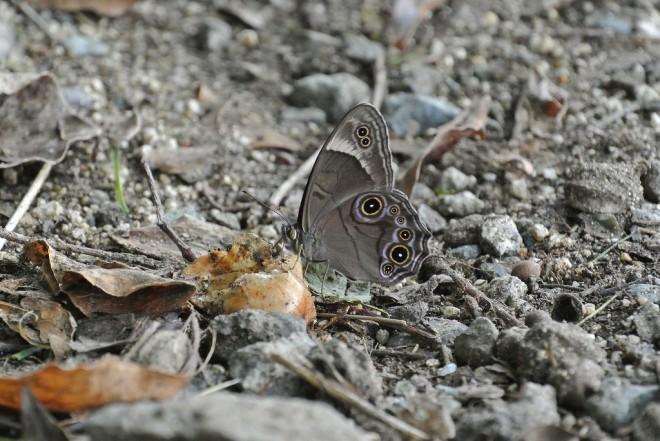 江津湖の昆虫4