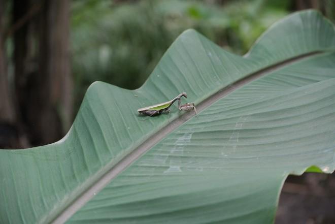 江津湖の昆虫2
