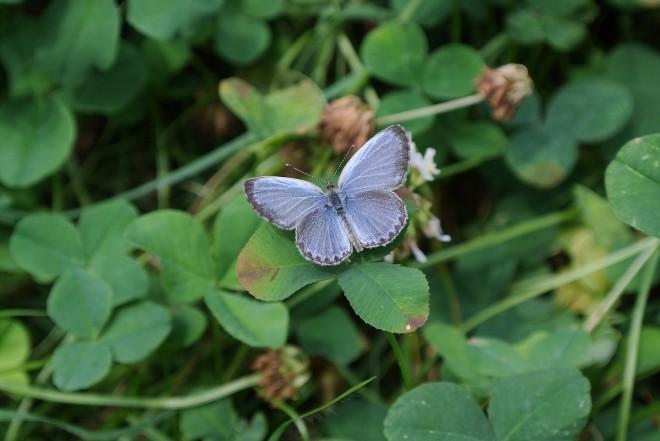 江津湖の昆虫3