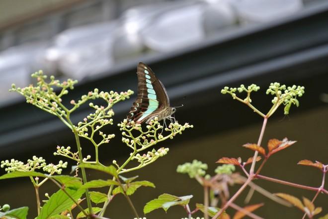 江津湖の昆虫5