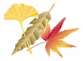 【終了】わくわくえづっ子塾「江津湖で落ち葉アート」参加者募集!