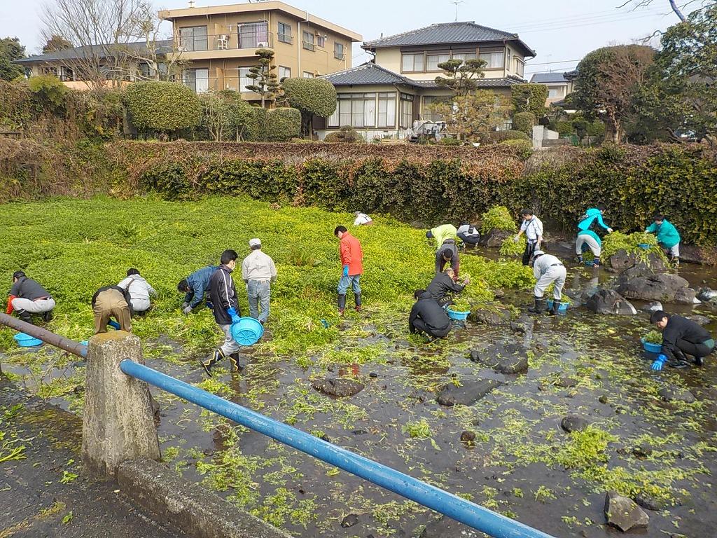 九電水草除去ボランティア作業