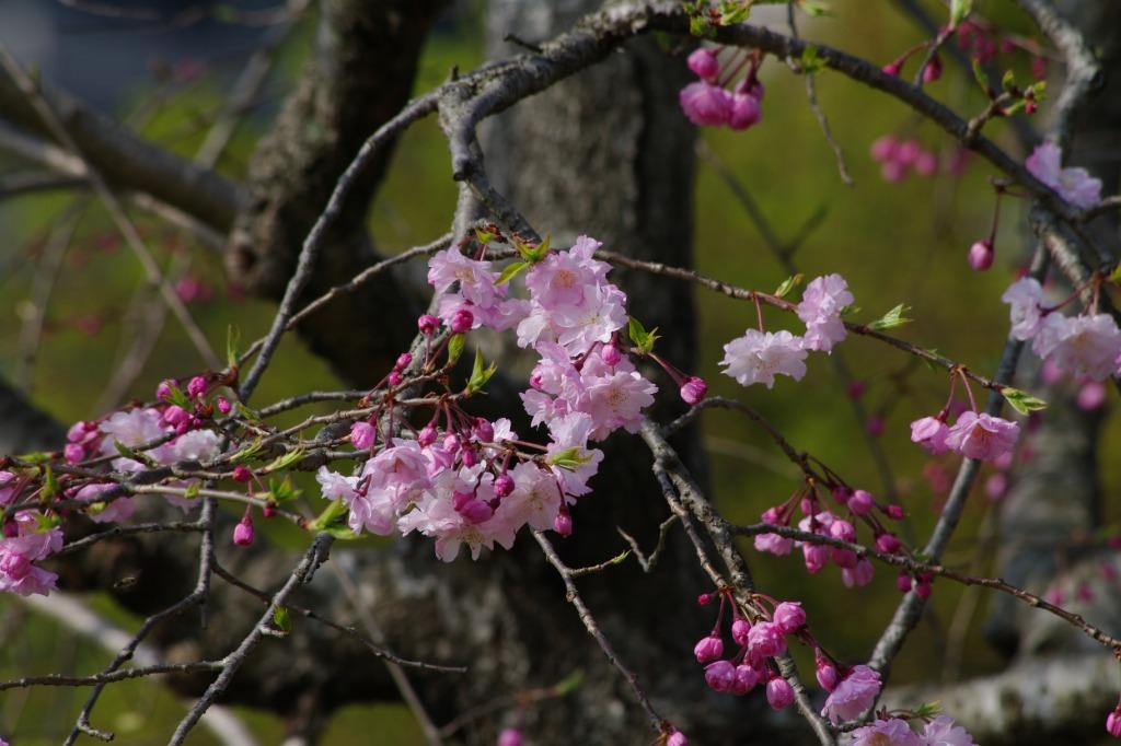 嗚呼、春の花