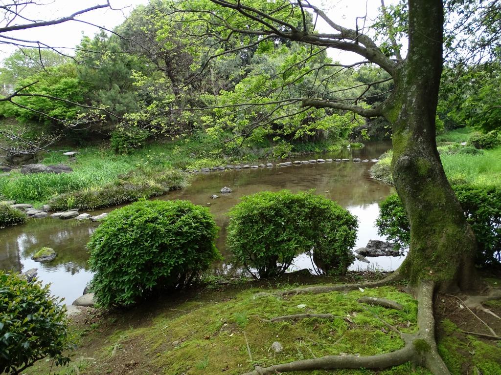 日本庭園作業