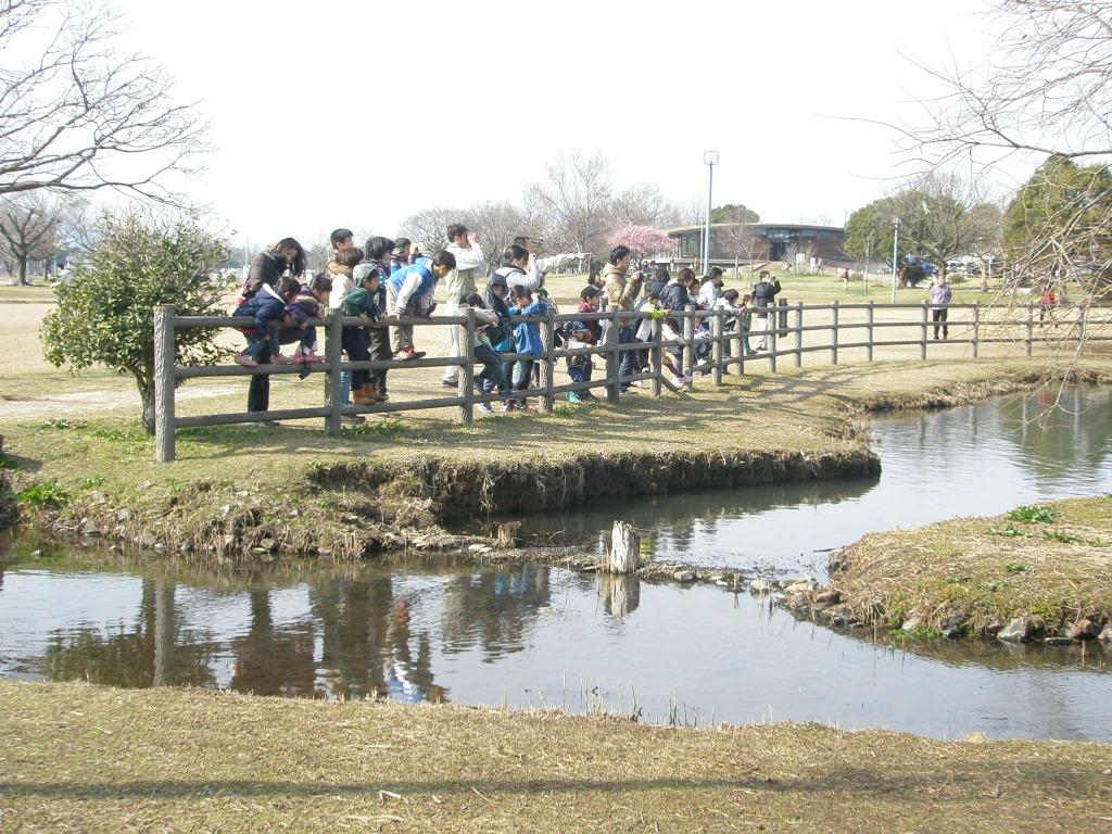 わくわくえづっ子塾「江津湖の野鳥を楽しもう!」