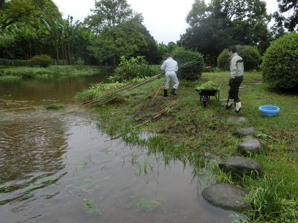 旧砂取細川家庭園ボランティア活動